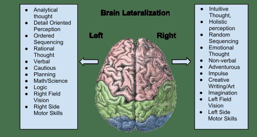 512px-Brain_Lateralization