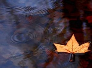 floating-leaf-cherie-duran1-lizwelliver-wordpress