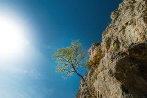 tree-cliff-750w